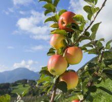 Foto: ©IDM Südtirol, Frieder Blickle
