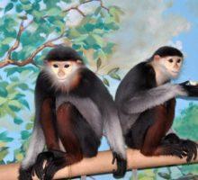 Vzácné opice langur duk. Foto: Zoo Chleby