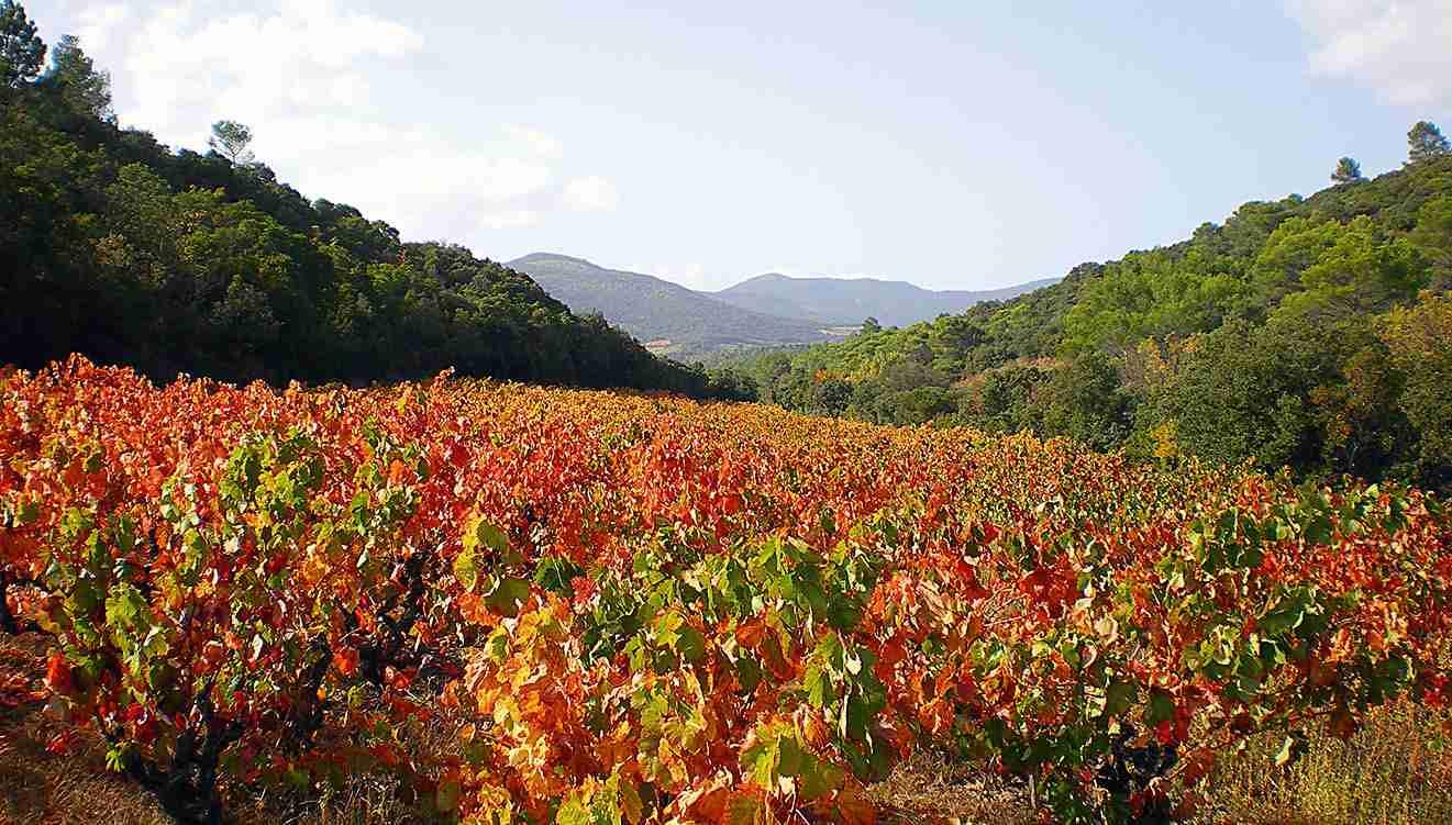 Podzim na vinicích Foto: Hérault-tourisme