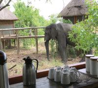 Xigera Camp, kde Vám do oken koukají sloni. Foto: Amara Zemplinerová