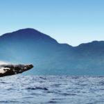 Na poloostrov Samaná za velrybím zpěvem