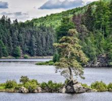 Chudobínská borovice zČeskomoravské vysočiny je vEvropě nejhezčím stromem
