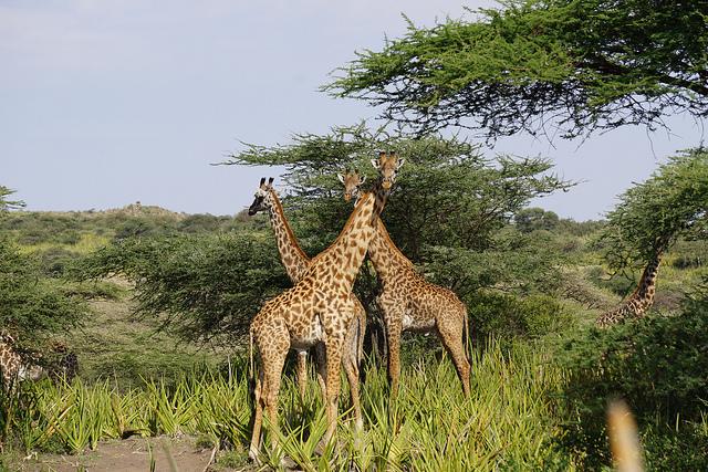 Ilustrační foto Foto: Flickr.com/Kat and Rully