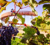 Otevírá se unikátní kruhová rozhledna: Stezka nad vinohrady
