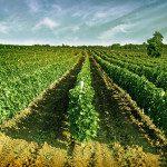 Ochutnejte kvalitní makedonská vína, snadno dostupná i u nás