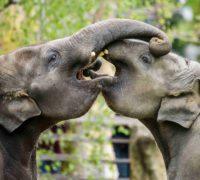 Tip na víkend v Praze – oslavy vzoologické zahradě