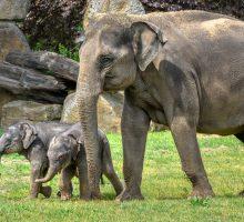 Oslavy Světového dne slonů vZoo Praha