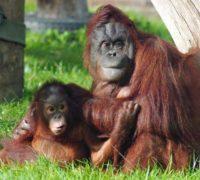 Foto: archiv Twycross Zoo
