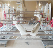 Národní muzeum po 132 letech poprvé restauruje kostru plejtváka myšoka