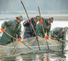 Rybáři na jihu Čech zahajují výlovy