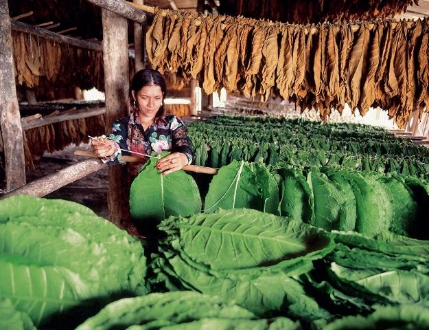 Výroba doutníku, Foto: Národní turistický úřad Dominikánské republiky