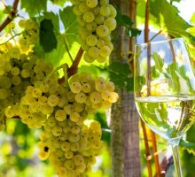Vinařské trasy na Chalkidiki