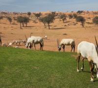 Emirát Rás al-Chajma podporuje udržitelný cestovní ruch