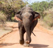 Čtyřnohý návštěvník luxusního hotelu na Srí Lance
