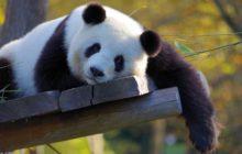 Čína hlásí slábnoucí příjmy z turistiky