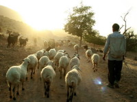 Foto: UNESCO © Maymand Cultural Heritage Base, P. Karamnejad