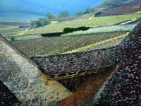 Vinohrady Burgundska, Francie Foto: UNESCO © Jean-Louis Bernuy