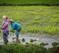 Jak to bude s vízy pro krátké cesty do Vietnamu?