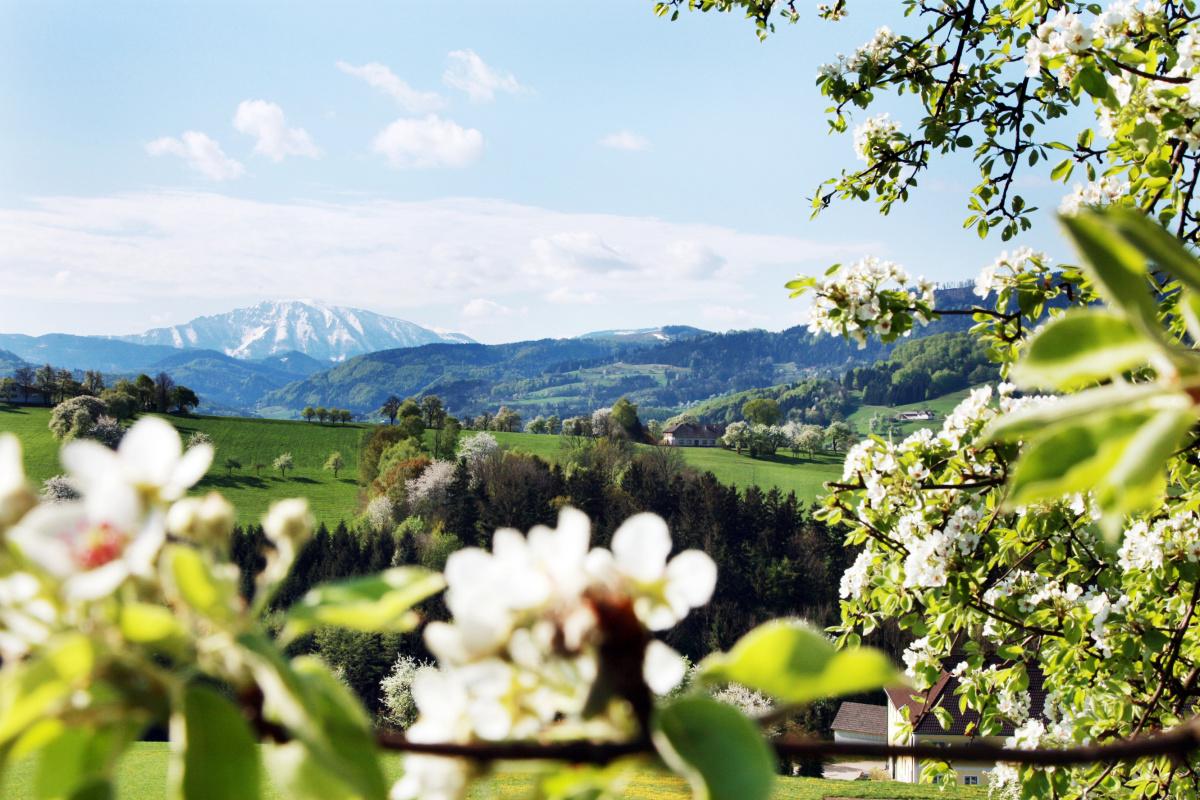 ÖTSCHER:REICH – Alpy a my: Dolnorakouská zemská výstava 2015