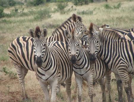 Zdroj: Swahili International Tourism Expo (S!Te)